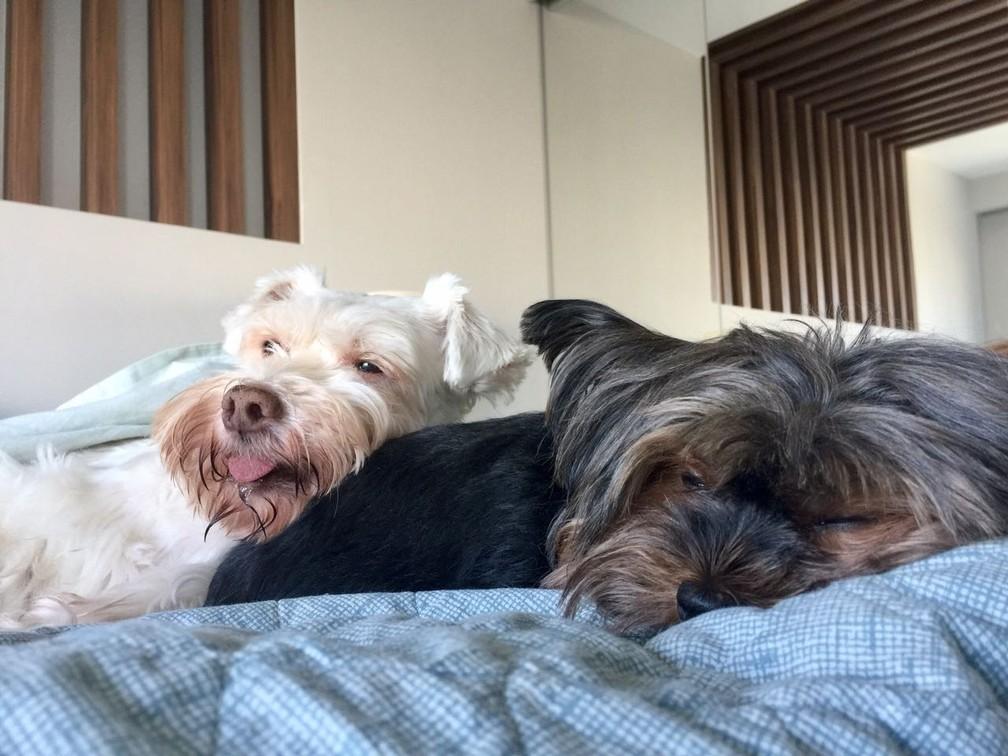 Cachorras são dois dos cinco pets de Cacá e Fabiana (Foto: Arquivo pessoal)