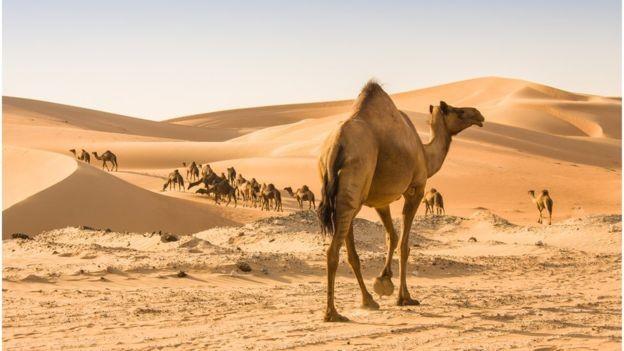A areia encontrada nos desertos não tem a composição apropriada para se misturar com água e cimento para se tornar concreto (Foto: GETTY IMAGES/BBC)