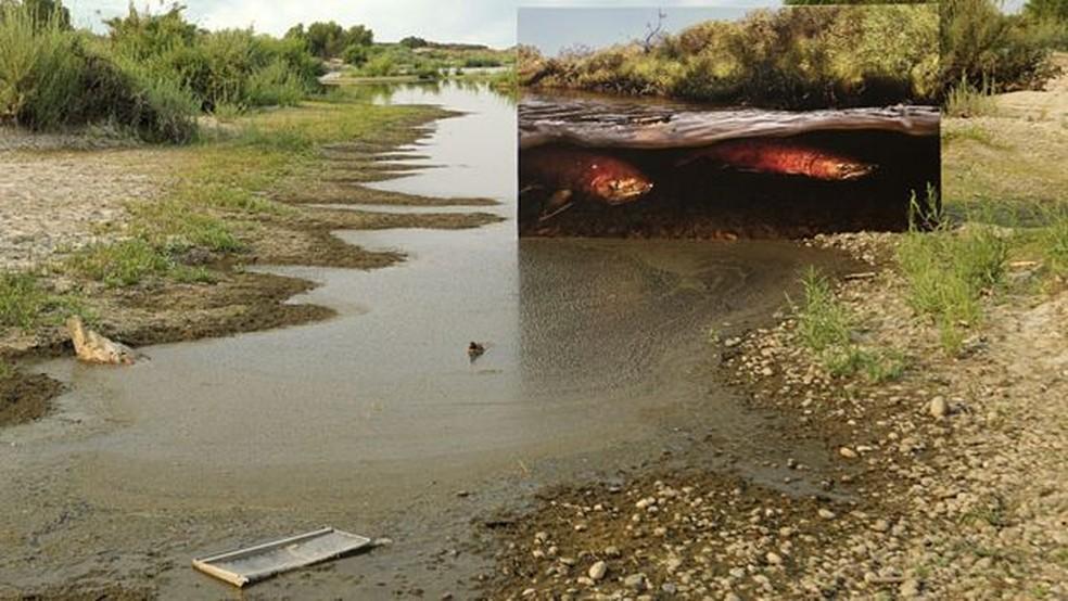 Veja a diferença que fez reintroduzir o salmão neste rio — Foto: Passion Pictures/BBC