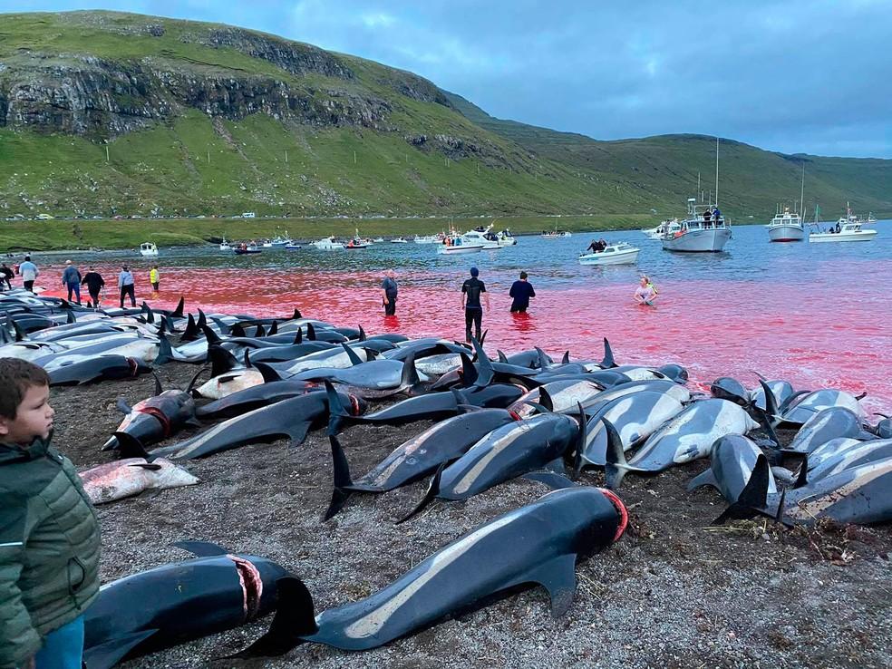 Ambientalistas dizem que 1.428 animais foram mortos no local, que é um ponto tradicional de caça, pois as águas rasas da enseada são usados para encurralar os animais. — Foto: Sea Shepherd Conservation Society/via AP