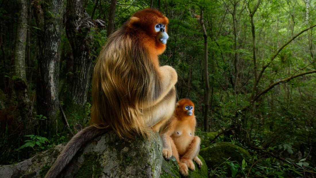 Imagem ganhadora do concurso Wild Life Photographer (Foto: Wild Life Photographer of the Year/Marsel van Oosten)