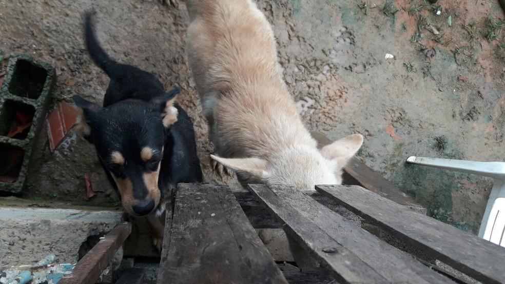 Cães abandonados foram resgatados em Caraguatatuba (Foto: Divulgação/Polícia Ambiental )