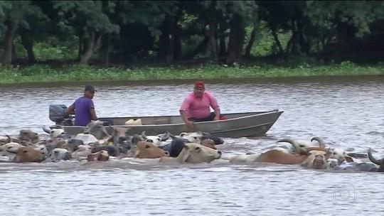 Chuvas deixam 21 municípios do Mato Grosso do Sul em emergência