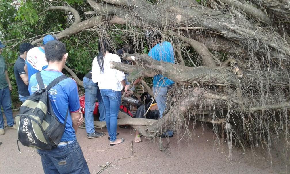 Populares tentaram socorrer o piloto que estava sob a árvore em Cacoal, RO (Foto: WhatsApp/Reprodução)