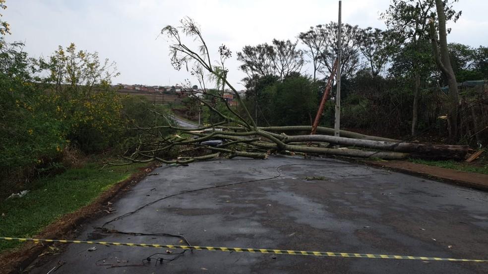 Árvore caiu sobre carro onde estavam três pessoas em Cambé — Foto: Patrícia Piveta/RPC