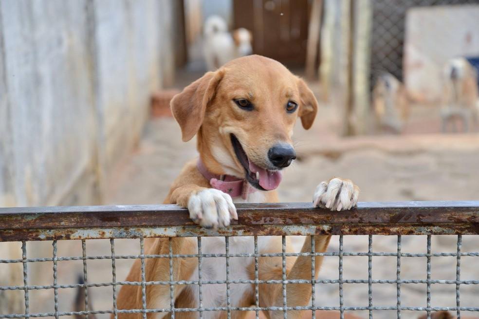 Com a manipulação dos medicamentos com adição de sabor, os animais são facilmente atraídos — Foto: Apelo Canino/Divulgação