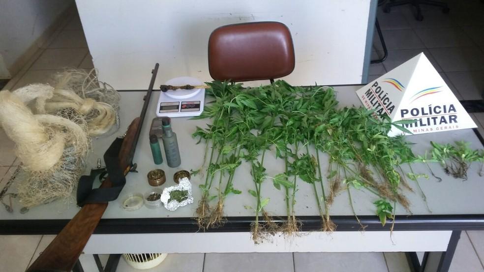 Pés de maconha foram apreendidos durante operação da polícia (Foto: Polícia Militar/Divulgação)