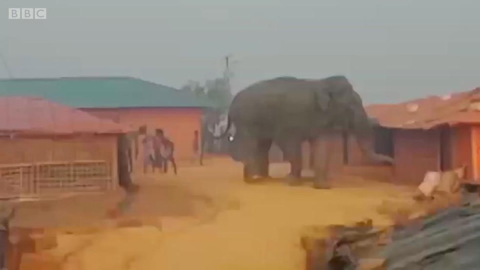 Ataques mortíferos de elefantes assustam campo de refugiados mais densamente povoado do mundo (Foto: BBC)