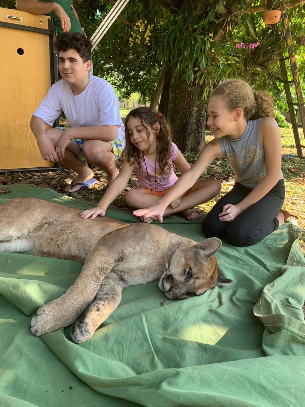 Crianças acompanharam o processo de captura do felino — Foto: Maria Lúcia Mattoso/VC no TG