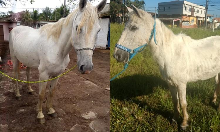 Cavalos resgatados de maus tratos vão para a adoção em Itanhaém, SP - Notícias - Plantão Diário