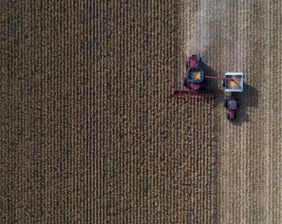 Brasil pode ter recorde na safra de milho mesmo com o atraso no plantio
