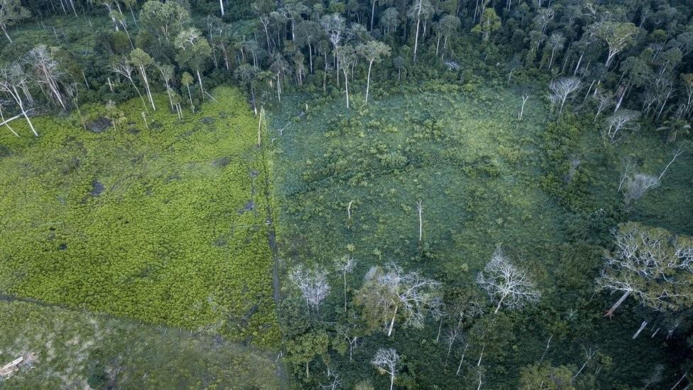 Conclusão da ProPublica é que os créditos de carbono não compensaram a quantidade de poluição que se esperava, ou trouxeram ganhos que foram rapidamente revertidos ou que não podiam ser comprovados e medidos (Foto: FERNANDO MARTINHO FOR PROPUBLICA, via BBC News Brasil)