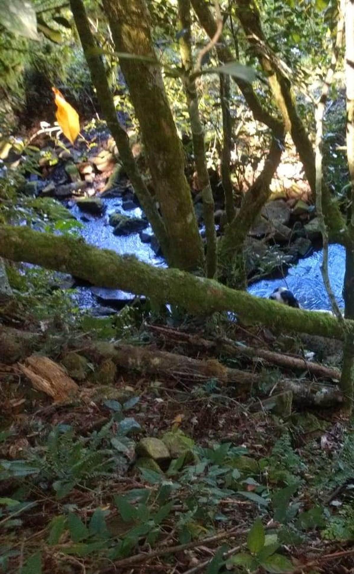 Corpo de idoso desaparecido é encontrado em riacho no Oeste de SC; cão de estimação estava ao lado