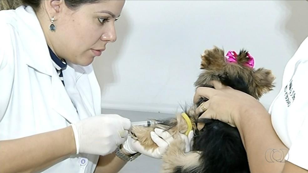 Veterinária realizou testes de calazar em cães de Gurupi (Foto: Reprodução/TV Anhanguera)