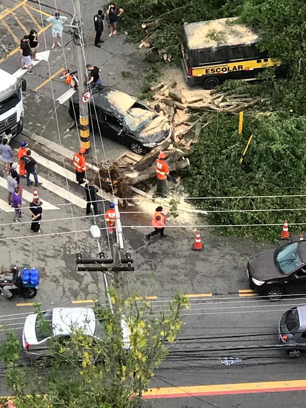 Árvore cai sobre carro no Ipiranga — Foto: Arquivo pessoal