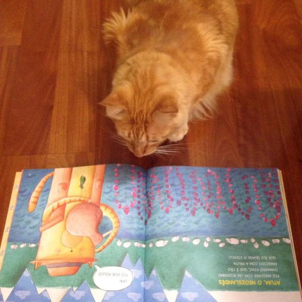 No livro, gato Atum mora em vários países em suas sete vidas (Foto: Thais Laham/Arquivo pessoal)