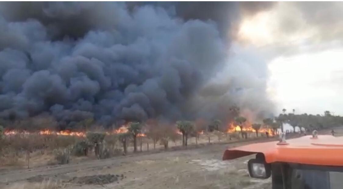 Incêndio de grande proporção toma conta às margens de rodovia em cidade no Pantanal de MS