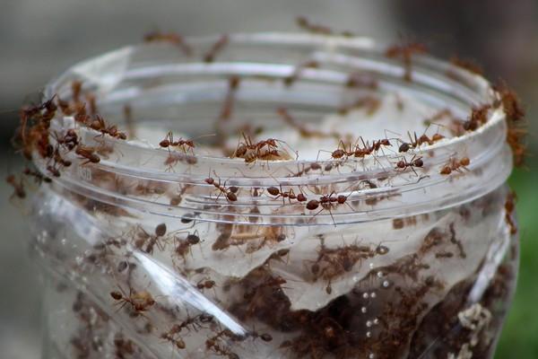 O universo das formigas seria a base desta animação que nunca saiu do papel (Foto: Getty Images)