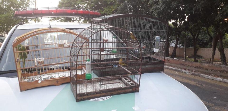 Homem é detido com pássaros silvestres em Marília - Notícias - Plantão Diário
