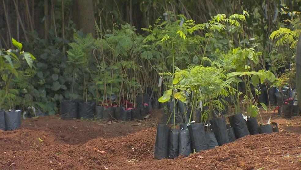 Produtos que não servem para alimentação são usados como adubo na horta do projeto em Tatuí — Foto: Mike Adas/Tv Tem