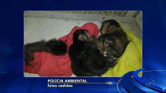 Mulher flagrada com macacos em mochila já foi abordada outras sete vezes, diz polícia