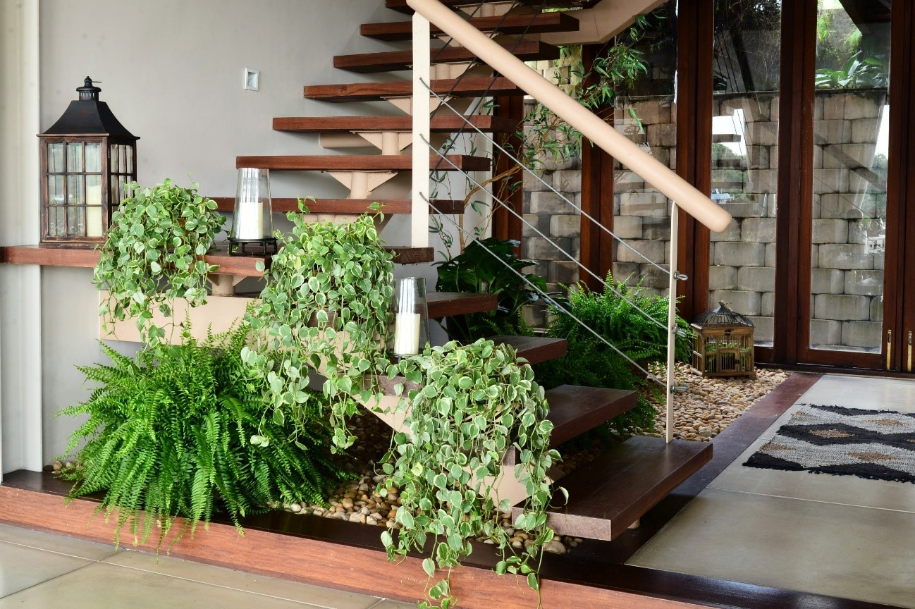 Diferentes espécies despontam nos degraus da escada e no vão sob ela, na Casa Étnica, em Manaus. Destaque para as samambaias  (Foto: Divulgação)
