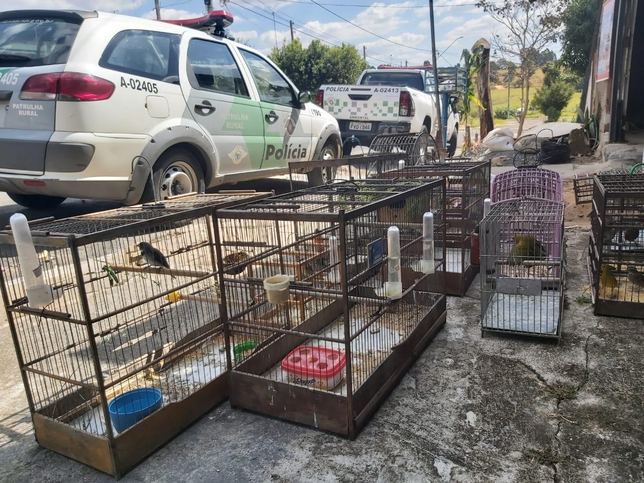 Polícia Ambiental resgata mais de 30 pássaros silvestres mantidos em cativeiros em Marília