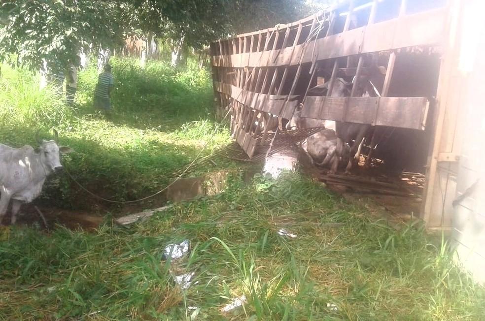 Queda de caminhão boiadeiro deixou animais feridos na BR-135 (Foto: Divulgação/PRF)