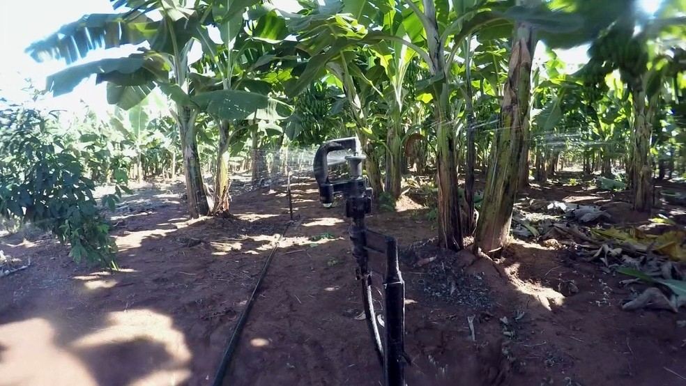 Produtores investem em irrigação para produzir banana (Foto: Reprodução/TV TEM)