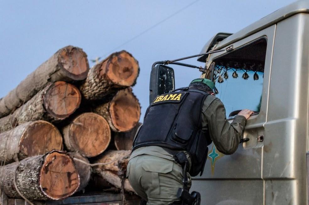 Fiscal do Ibama durante fiscalização de Madeira Florestal — Foto: Vinícius Mendonça - Ibama