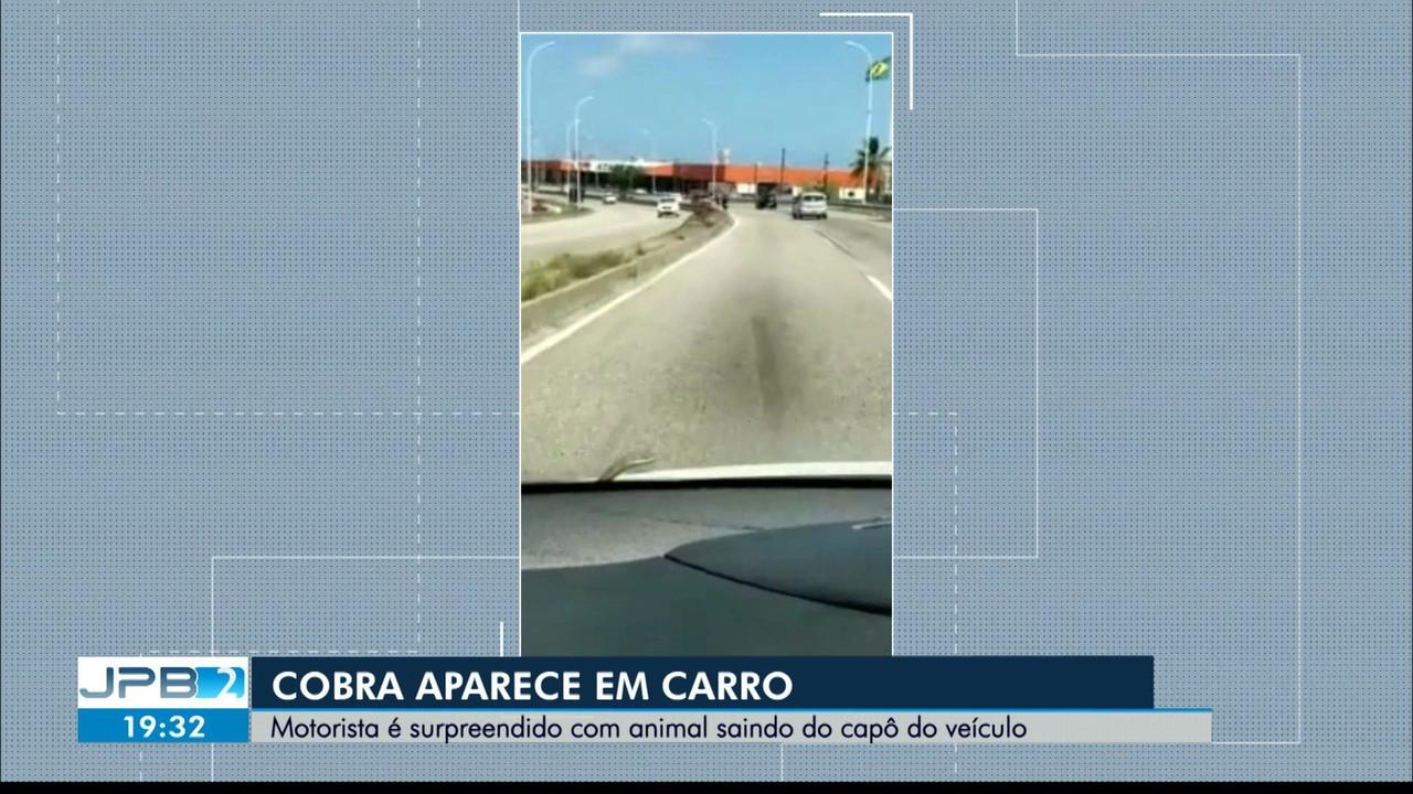 Cobra aparece em capô de carro em João Pessoa