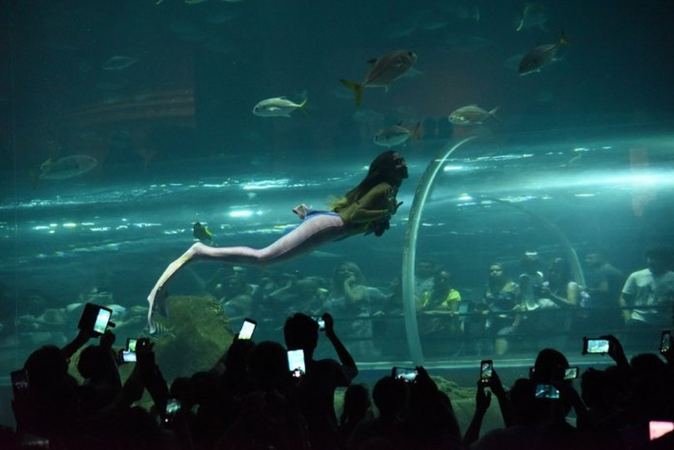 Sereia — Foto: Atrações para a criançada fazem parte do AquaRio - Foto: divulgação