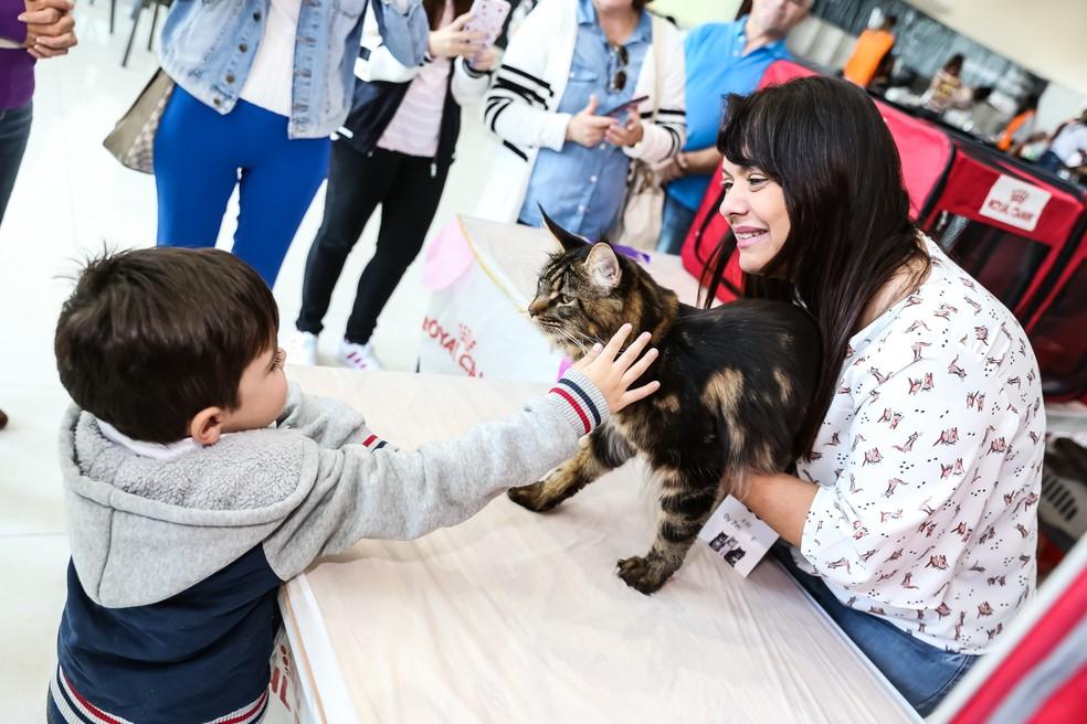 Visitantes poderão ter contato com mais de 200 gatos de 14 raças diferentes (Foto: Divulgação)