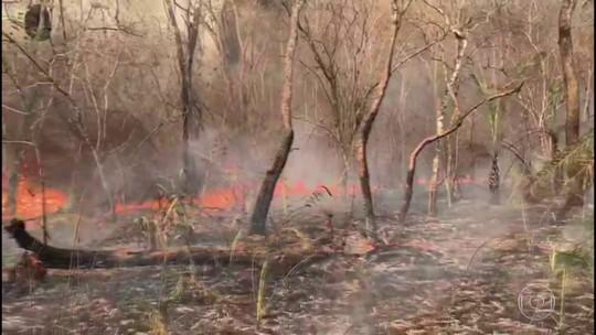 Pesquisadores começam a contar animais mortos nas queimadas da região do Pantanal