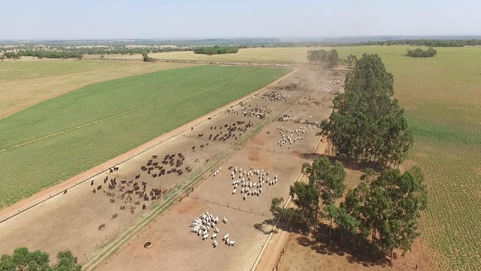 Fazenda Ventura é referência na produção de gado de corte e em carne de qualidade, em Figueirão (MS). — Foto: Thiago Corazza/Arquivo pessoal