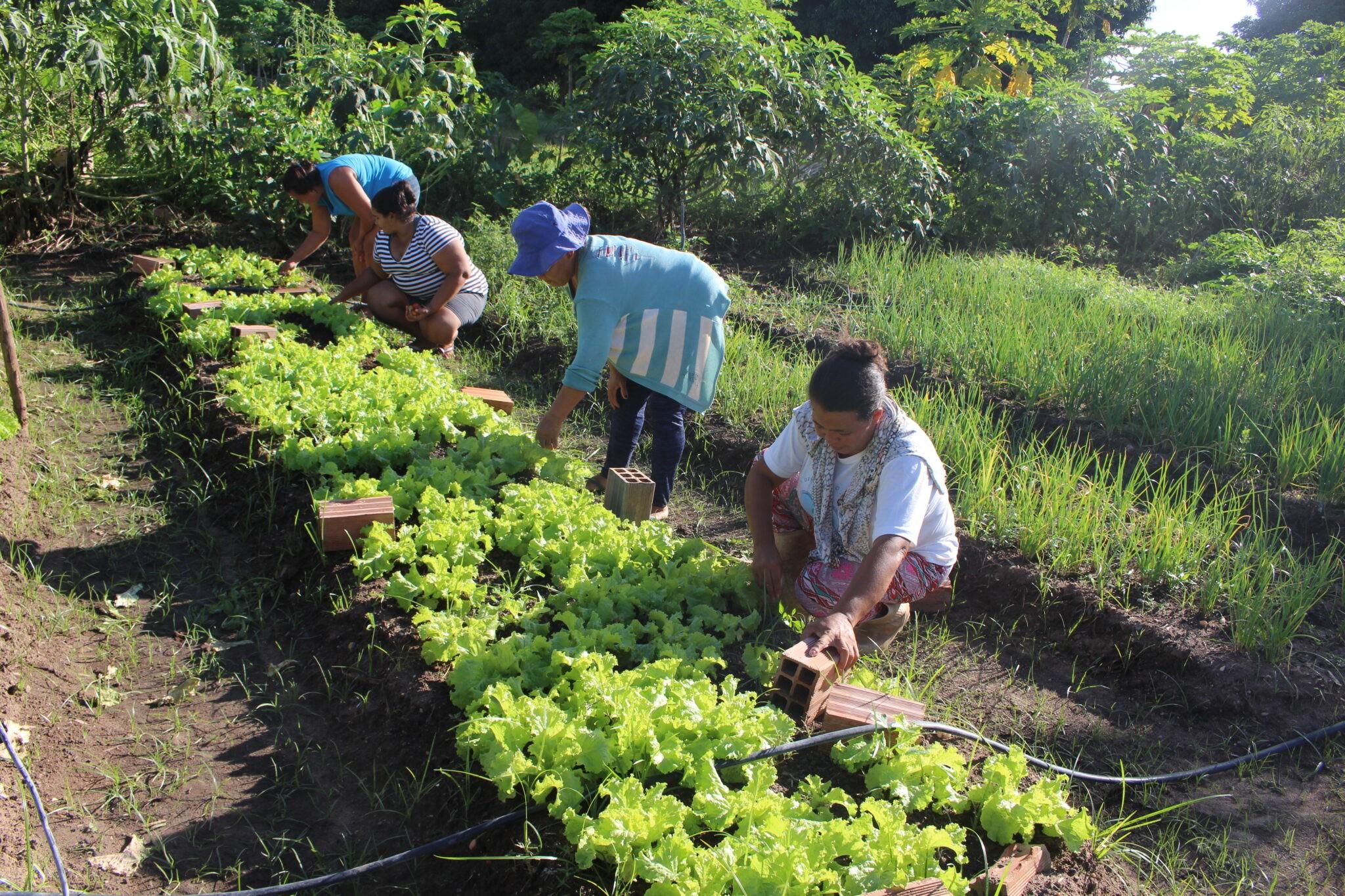 Governo libera pagamento do Garantia-Safra para 197 mil agricultores familiares