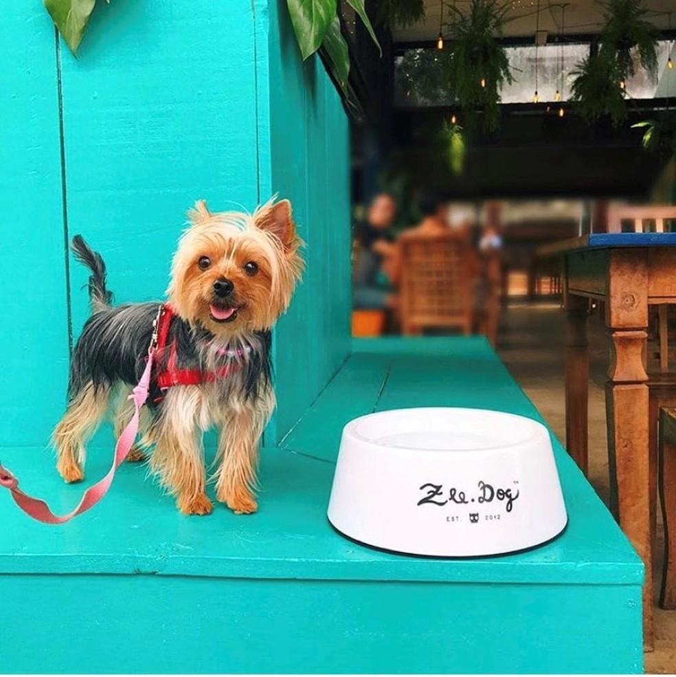 Pet cliente do restaurante The Plant — Foto: Instagram @theplantbr