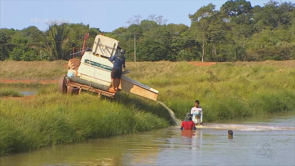 Sal é usado na hora de trocar os peixes de tanque — Foto: Rondônia Rural/Rede Amazônica