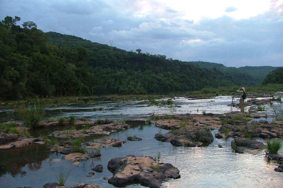 Em 2008 ornitólogo relatou em pesquisa possível avistamento da harpia no Paraná — Foto: Raphael Santos/ Arquivo Pessoal