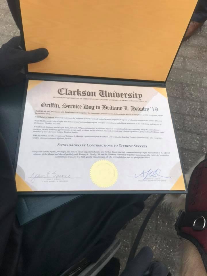 O diploma canino.  (Foto: Reprodução / Facebook)
