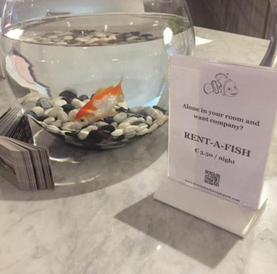 Hotel oferece aluguel de peixe para hóspedes mais solitários