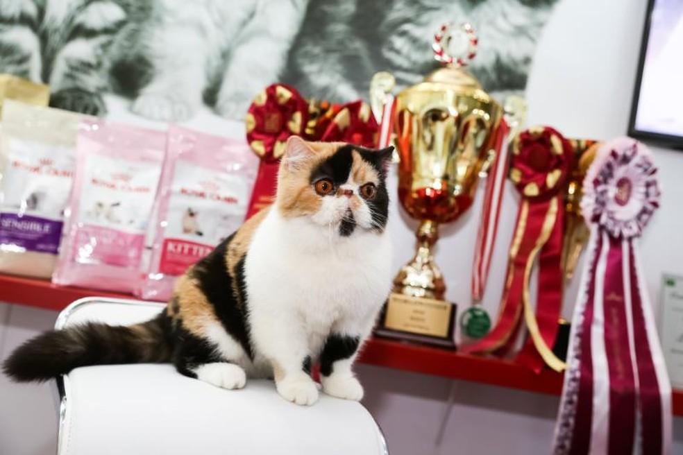 Vencedores do concurso poderão ser classificados para a etapa mundial (Foto: Divulgação)