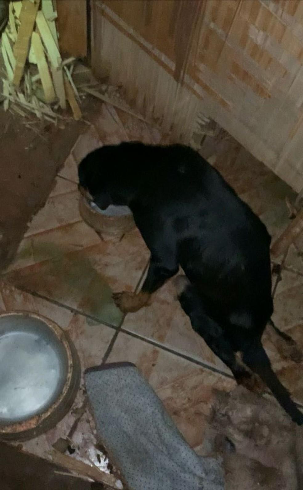 Homem é preso após deixar cadela deficiente presa em situação de abandono em MS — Foto: Polícia Militar Ambiental/Divulgação