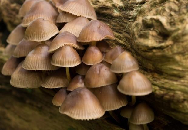 Cogumelos crescendo em tronco de árvore (Foto: Pexels)