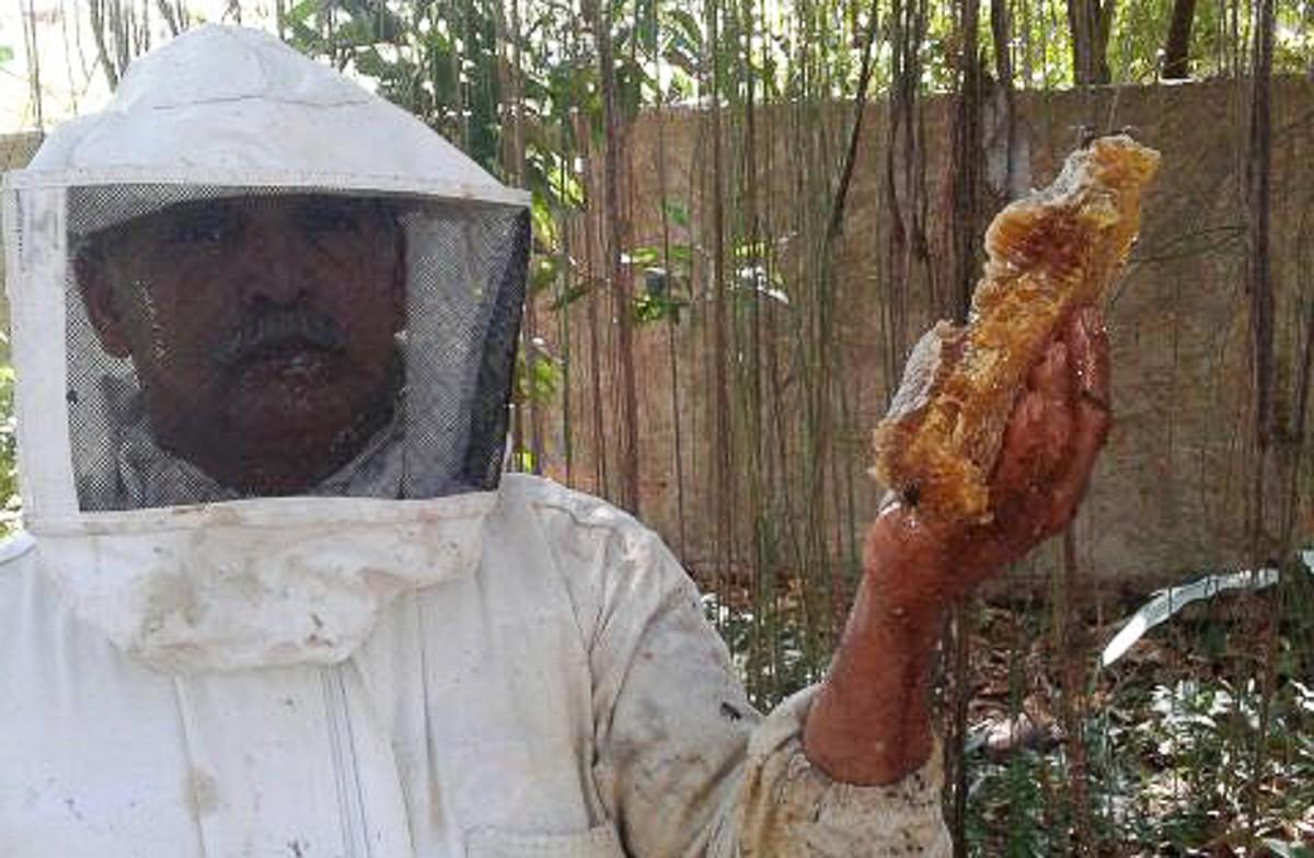 Defesa Civil captura abelhas no Parque Rosário, em Campos, no RJ