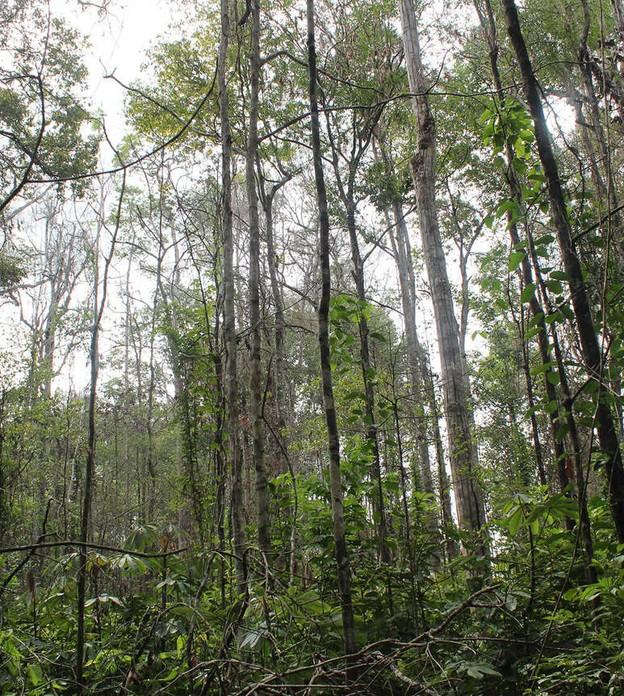 BBC - Quando a floresta está degradada, fica mais vulnerável a incêndios e a mudanças climáticas
