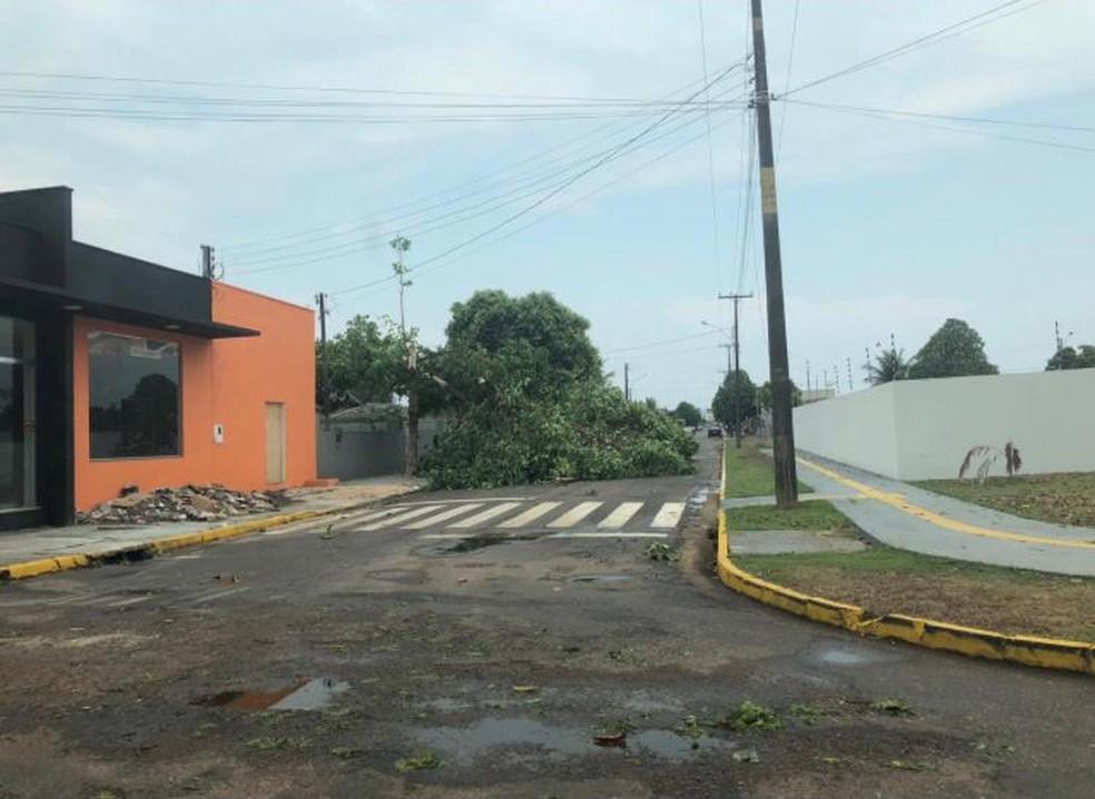 Rua de Vilhena, RO, ficou obstruída após queda de árvore — Foto: Reprodução/Redes Sociais