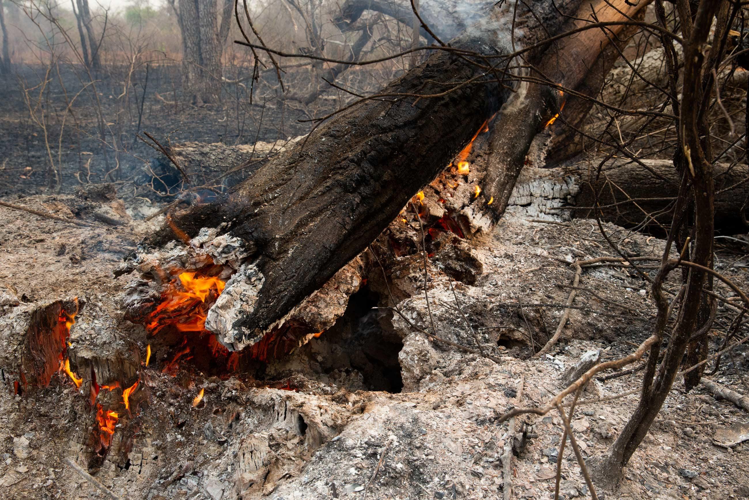 Incêndios no Pantanal continuam avançando, mesmo com chuvas isoladas na região