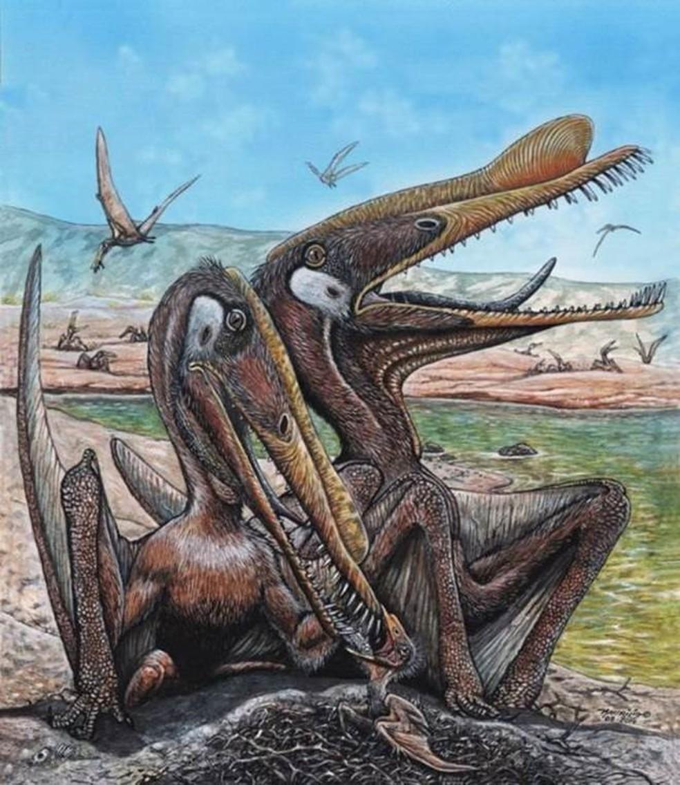 Fósseis de pterossauro 'Anhanguera santanae' só foram encontrados no Brasil — Foto: Divulgação/Maurilio Oliveira/Museu Nacional