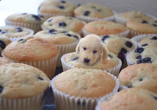 @dogs_infood  (Foto: Instagram/Reprodução)